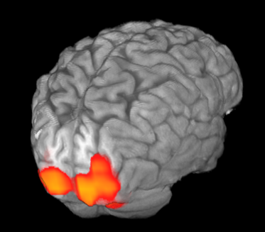fMRI visual