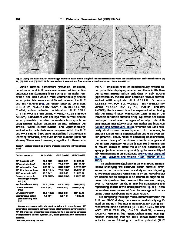 Download Differences in striatal spiny neuron action potentials between the spontaneously hypertensive and Wistar-Kyoto rat strains.